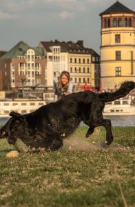 Barbara Oxenfort - Hundestory
