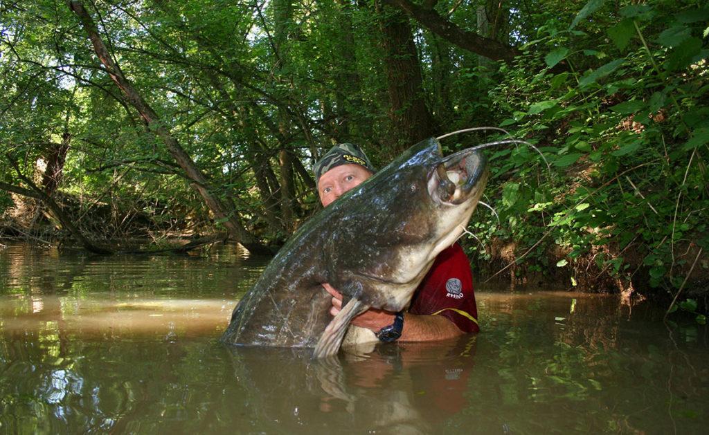 Fische im Rhein