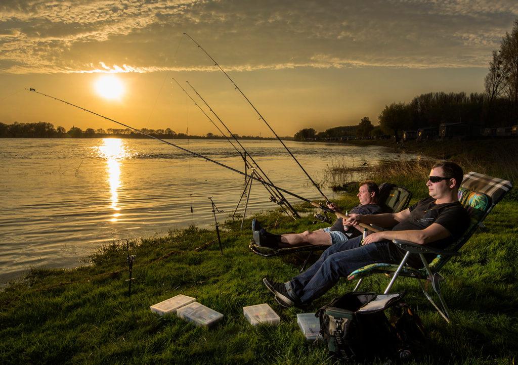 Fische-im-Rhein